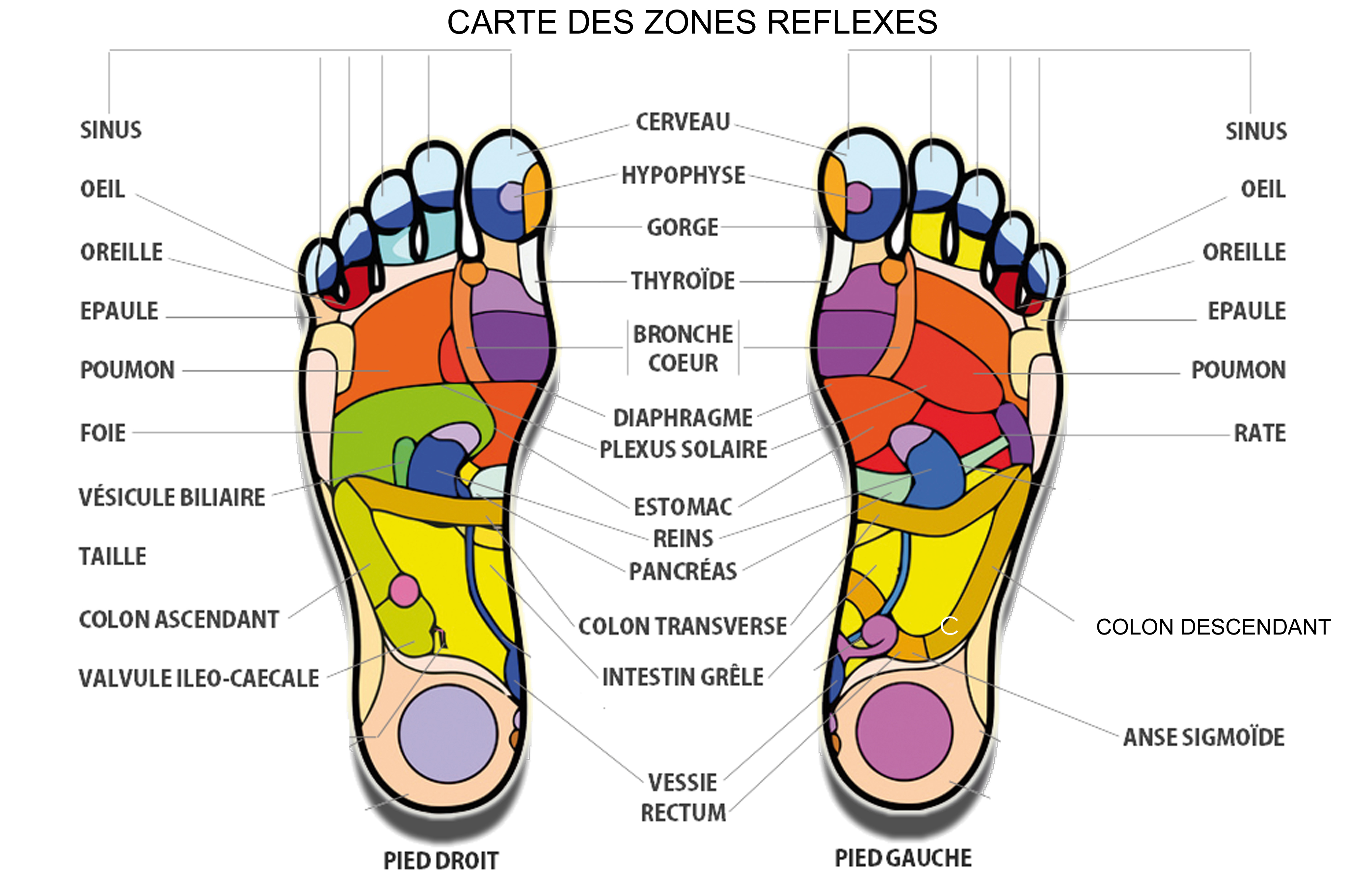 relaxation plantaire